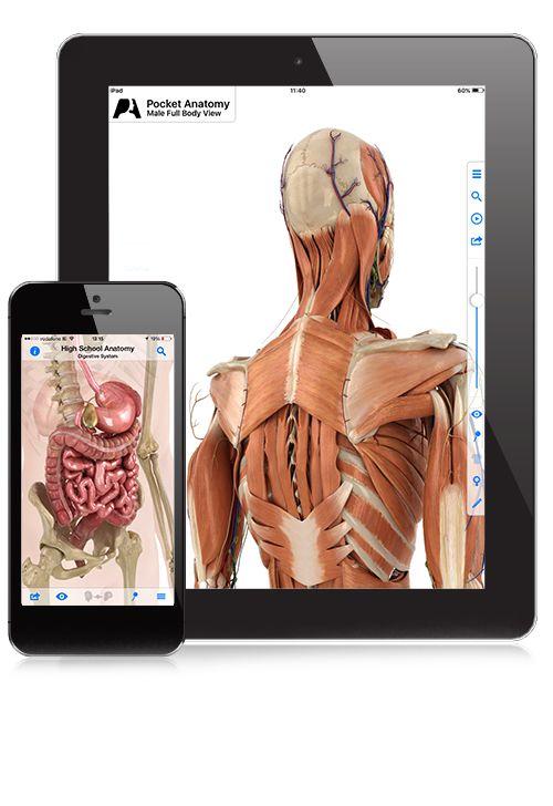 Pocket Anatomy Anatomus The Ultimate Human Anatomy